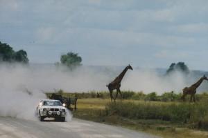 lars-erik torph kör safari rallyt med giraffer springandes brevid vägen